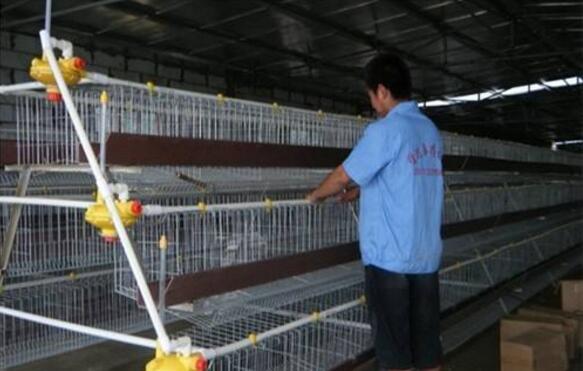 养殖场鸽子笼